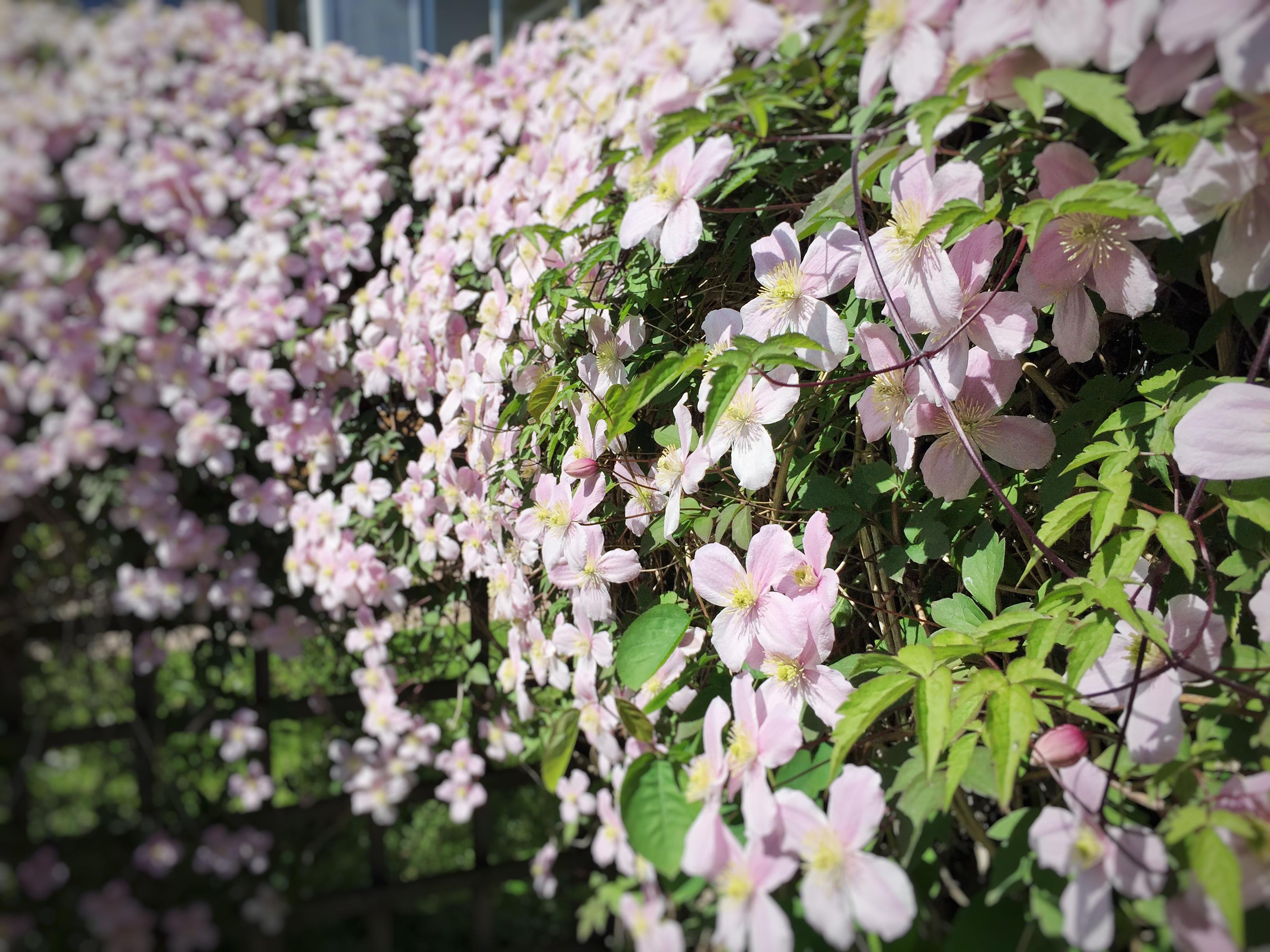 20150524_Blomstervägg